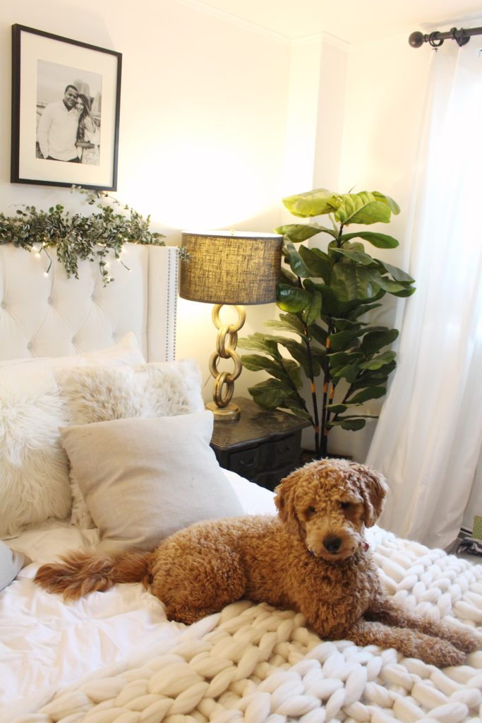 mini goldendoodle, bedroom reveal, nyc apartment, neutral home decor, home decor, neutrals, fig leaf pant, tufted headboard