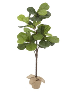 fig leaf plant